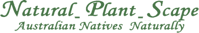 Natural Plant Scape